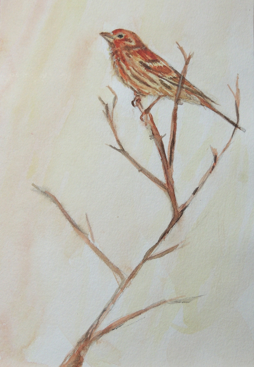 housefinch6x9